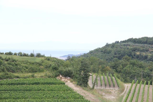 croatia-google-local-guides-meet-up-istria-wineries