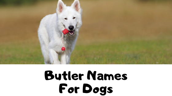 80+ Butler Names For Dogs