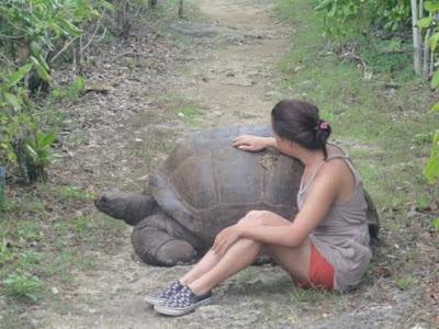 Iso kilpikonna
