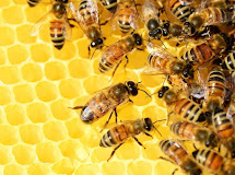 How to grow food for your bees,How to feed, bees