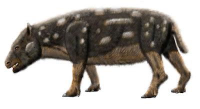 Megadolodus