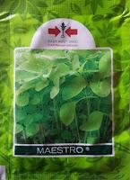 bayam maestro, budidaya bayam, manfaat bayam, jual benih panah merah, toko pertanian, toko online, lmga agro
