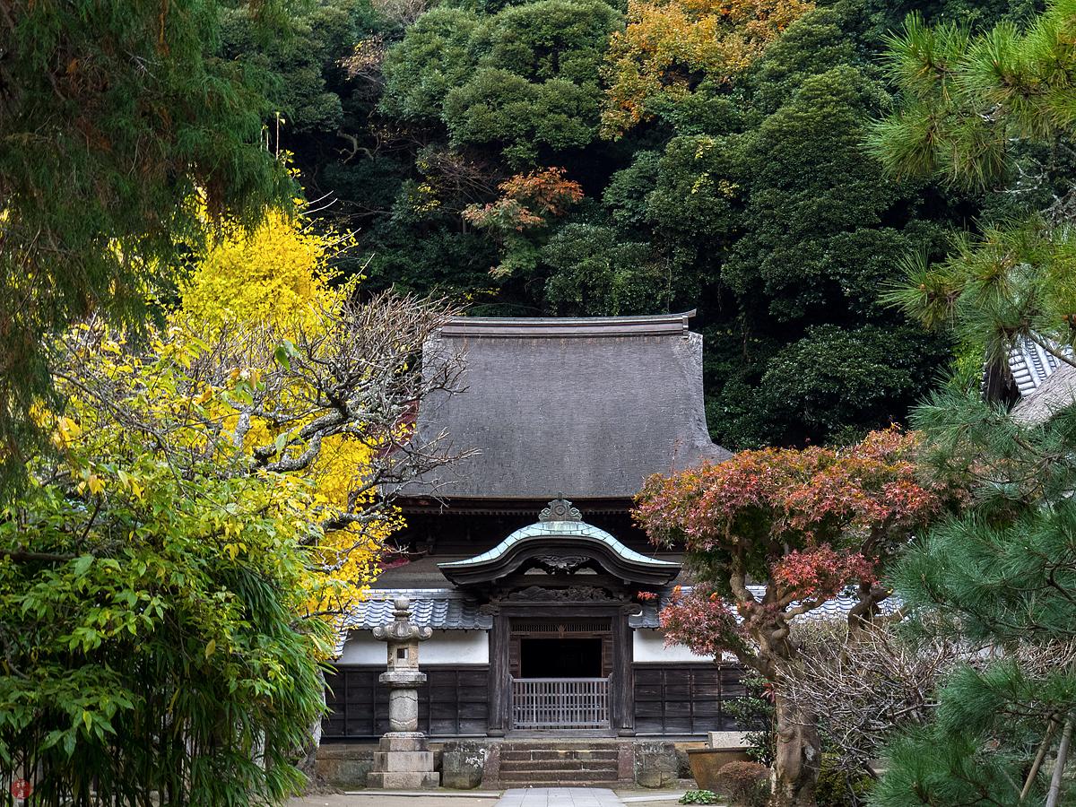 From The Garden Of Zen 2017