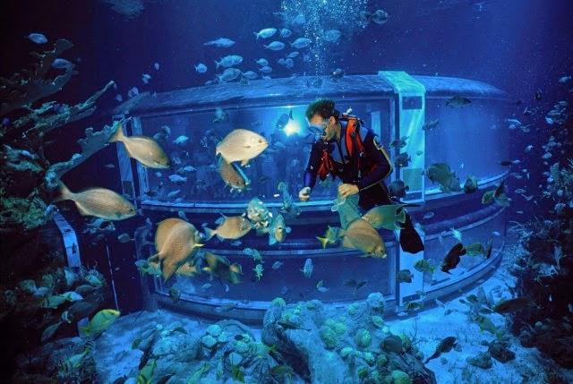 Mergulho Epcot DiveQuest na Disney em Orlando