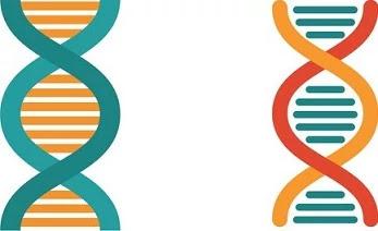 आनुवंशिकता (Genetics)।