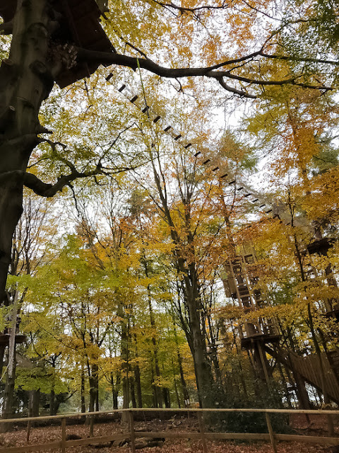 Go Ape at Temple Newsham Leeds - course in the Autumn