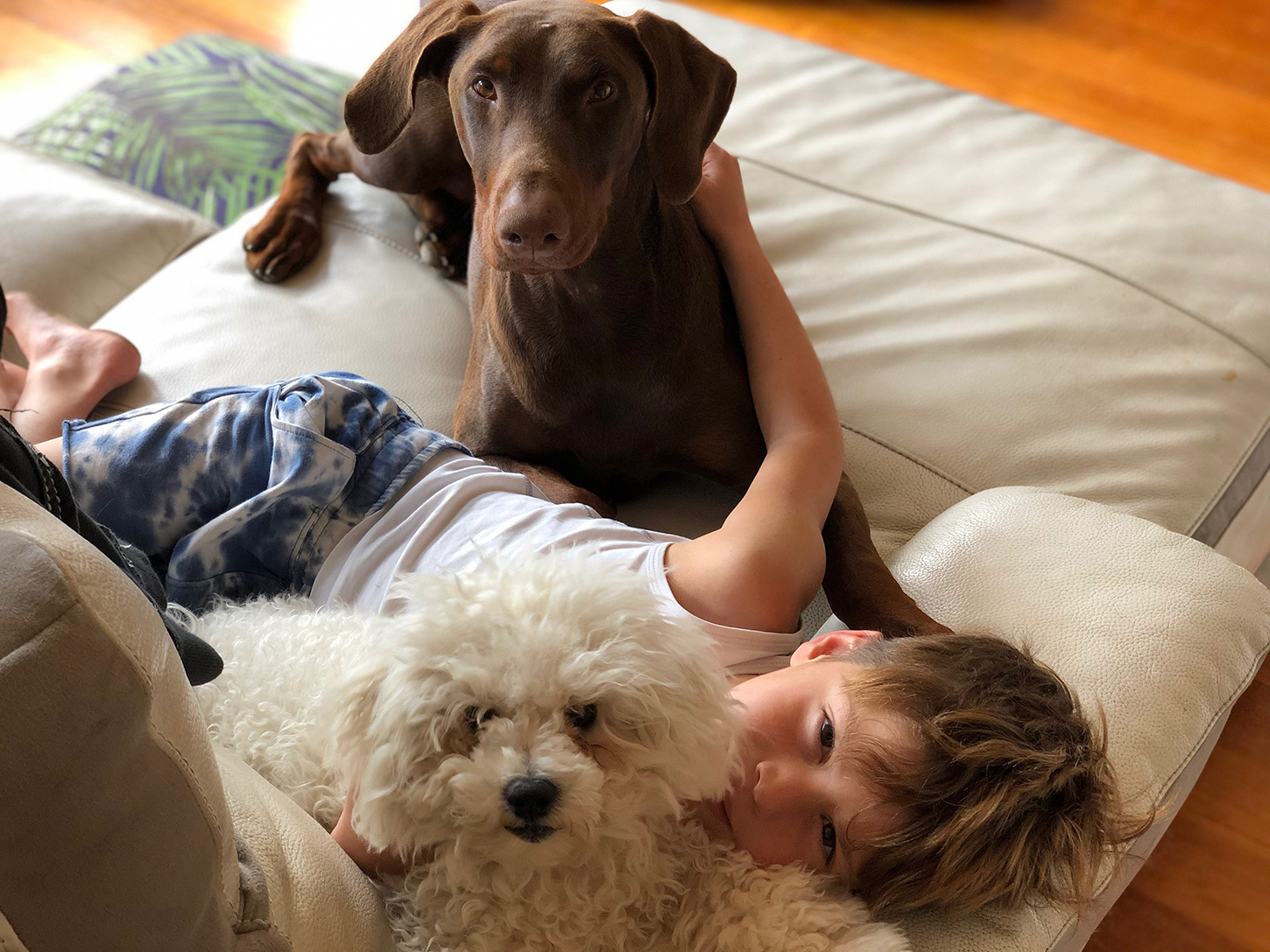 Beware Foreign Body Ingestions In Your Pets Australian Dog Lover