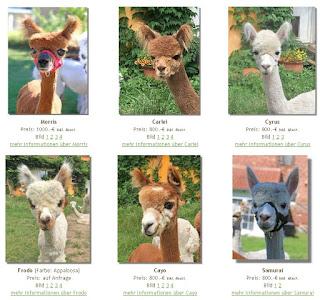 Alpakas kaufen in Brandenburg