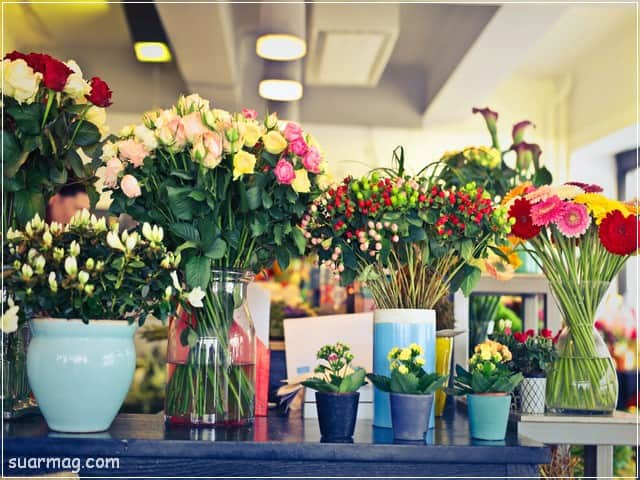 صور ورد - ورود جميلة 1 | Flowers Photos - Beautiful Roses 1