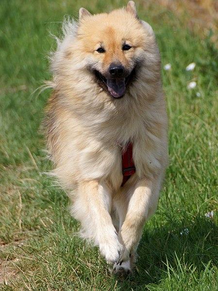 https://commons.wikimedia.org/wiki/File:Happy_dog_-_Flickr_-_Stiller_Beobachter.jpg