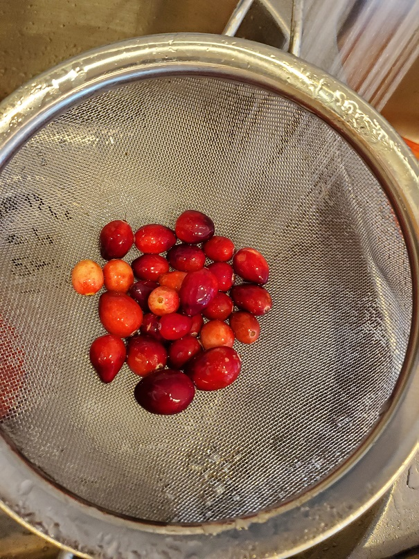 fresh cranberries in a strainer being washed