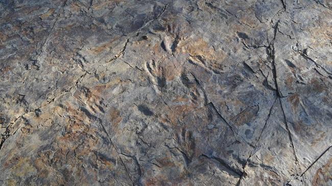 Pegadas fossilizadas de crocodilos bípedes/Reprodução