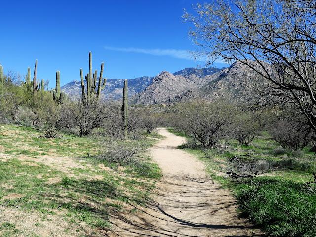 Catalina State Park, Tucson, Arizona. February 2020.