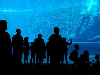 ジェノヴァ水族館のイルカの水槽に集まる人々