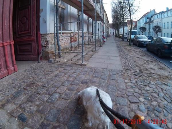 Ruppi Struppi Hund Sein In Ruppin Hundecam Auf Dem Weg