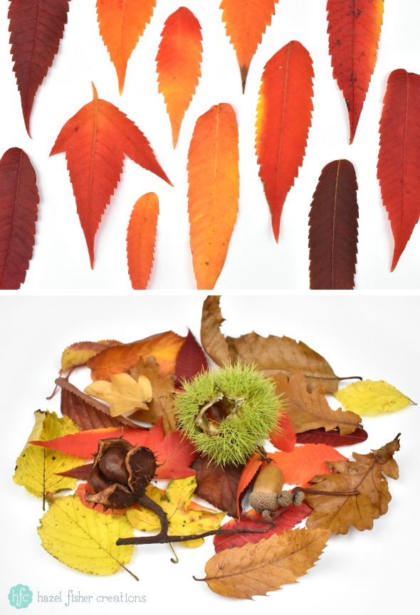 Things to Love About Autumn, Autumn Leaves and Chestnuts photography by Hazel Fisher Creations