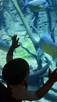 Turning Mommy: Vancouver Aquarium