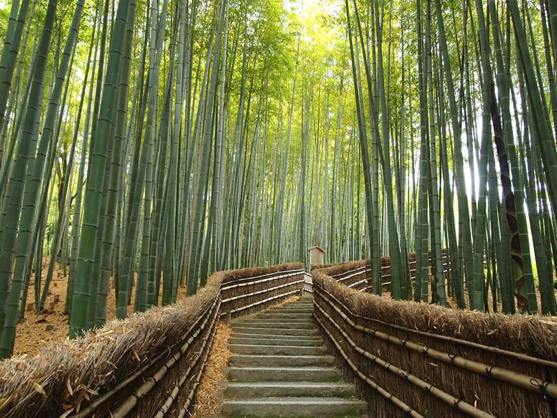 Bamboo Forest of Sagano