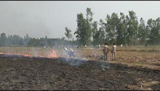अन्न दाता का नुकसान : खेत में लगी आग, 12 बीघे में खड़ी गेहूं की फसल जलकर खाक