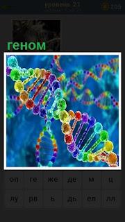 в цветном виде нарисован геном человека в виде спирали