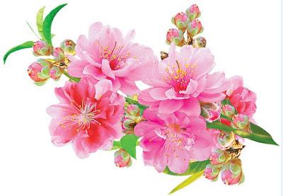 Chúc Mừng Xuân Mới Kỷ Hợi