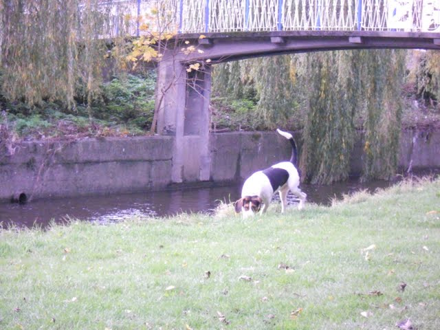 Walk the River Dodder in Dublin - dog off lead