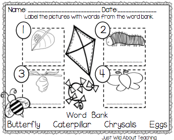 Number Names Worksheets : butterfly life cycle printables ~ Free ...