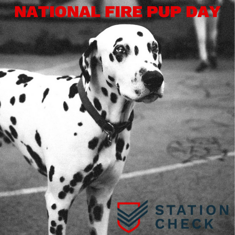 National Fire Pup Day Wishes Pics