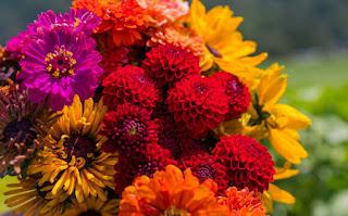 फूलों के नाम हिंदी और इंग्लिश में ▷ Flowers Name