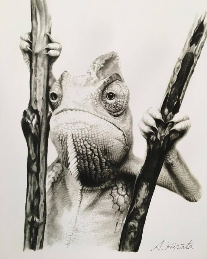 07-Chameleon-from-Yemen-A-Hirata-www-designstack-co