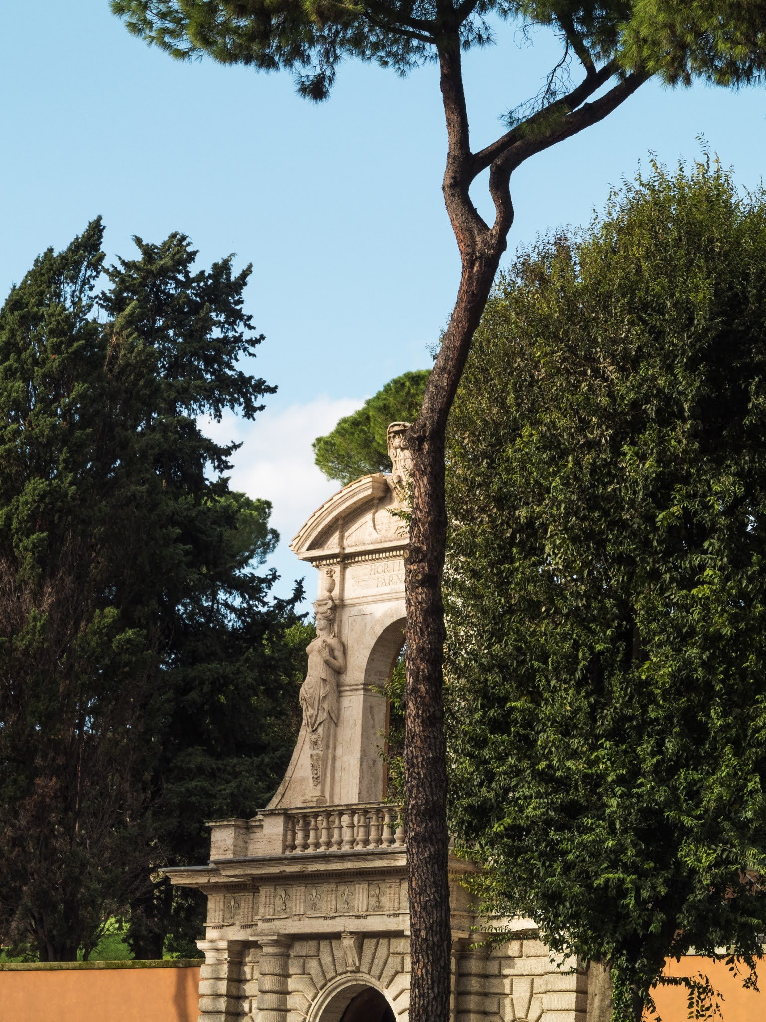 An umbrella pine in front of the Palatine Hill entrance on Via di San Gregorio.
