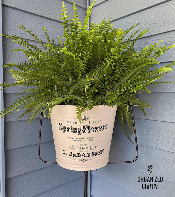 Photo of a fern in a decorated bucket