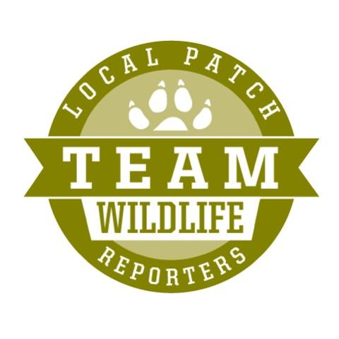 Local Patch Reporter