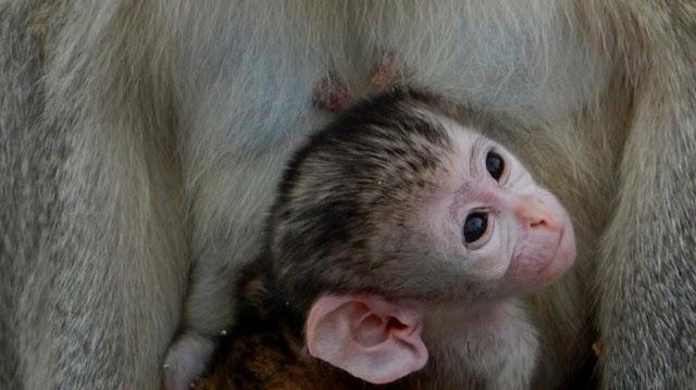 Csak pár fotóra bújt elő a Pécsi Állatkert új jövevénye