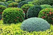نباتات الزينه وانواعها بالصور + فديو وكيفيه العنايه بها