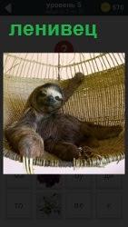 Изображение гамака в котором лежит и качается зверек ленивец, держась лапами за края