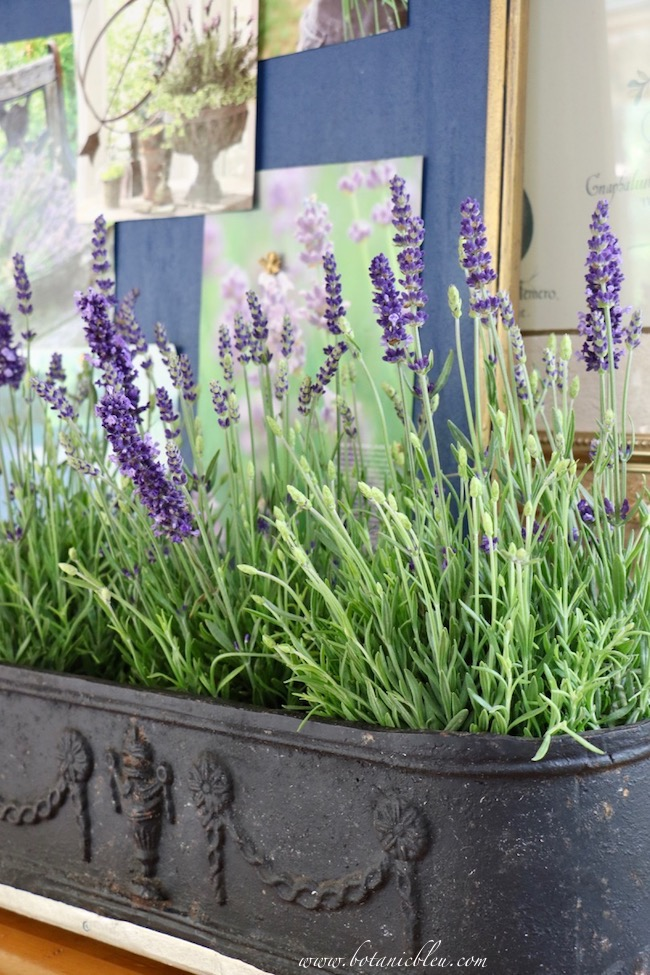 French Country Lavender Bulletin Board Inspiration