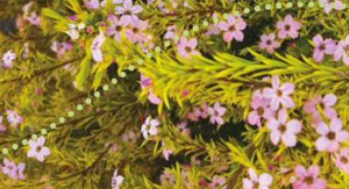 beautiful flowers, garden, soil, backyard