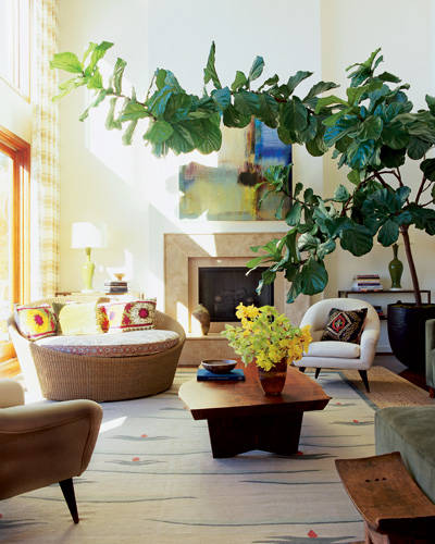Boho Beach Bungalow House Plants