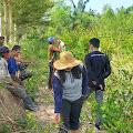 Ribuan Batang Mangrove Dirusak Orang Suruhan Pengusaha Tambak