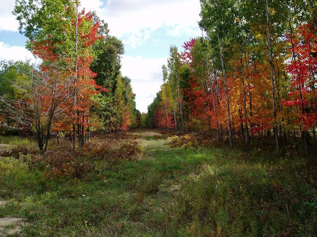 La forêt notre capital naturel.