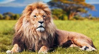 Leul: Simbol și semnificație