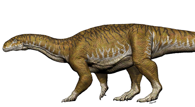 LaporanPenelitian.com Ingenia prima shows dinosaur gigantism since Triassic