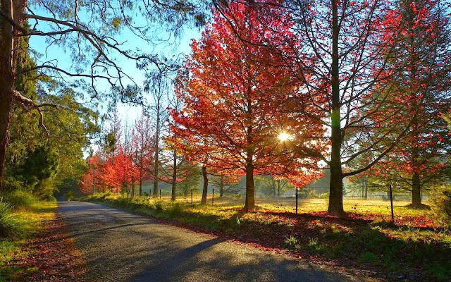 Herfst wallpaper met rode bomen