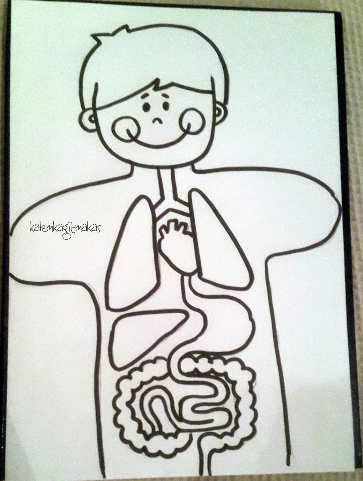 Zeynepin Atölyesi Organ Kuklasi Yapalim