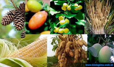 ciri ciri tumbuhan berbiji, contoh, klasifikasi, reproduksi