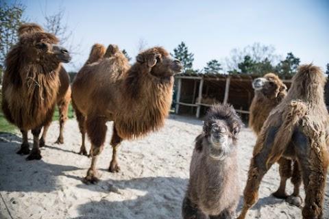 Felmérik a Veszprémi Állatkert állatállományát