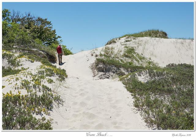 Crane Beach: ...