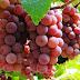 Emater/RS-Ascar atualiza dados da Fruticultura no RS