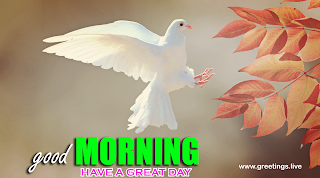 fresh morning flying beautiful dove bird good morning nature greetings